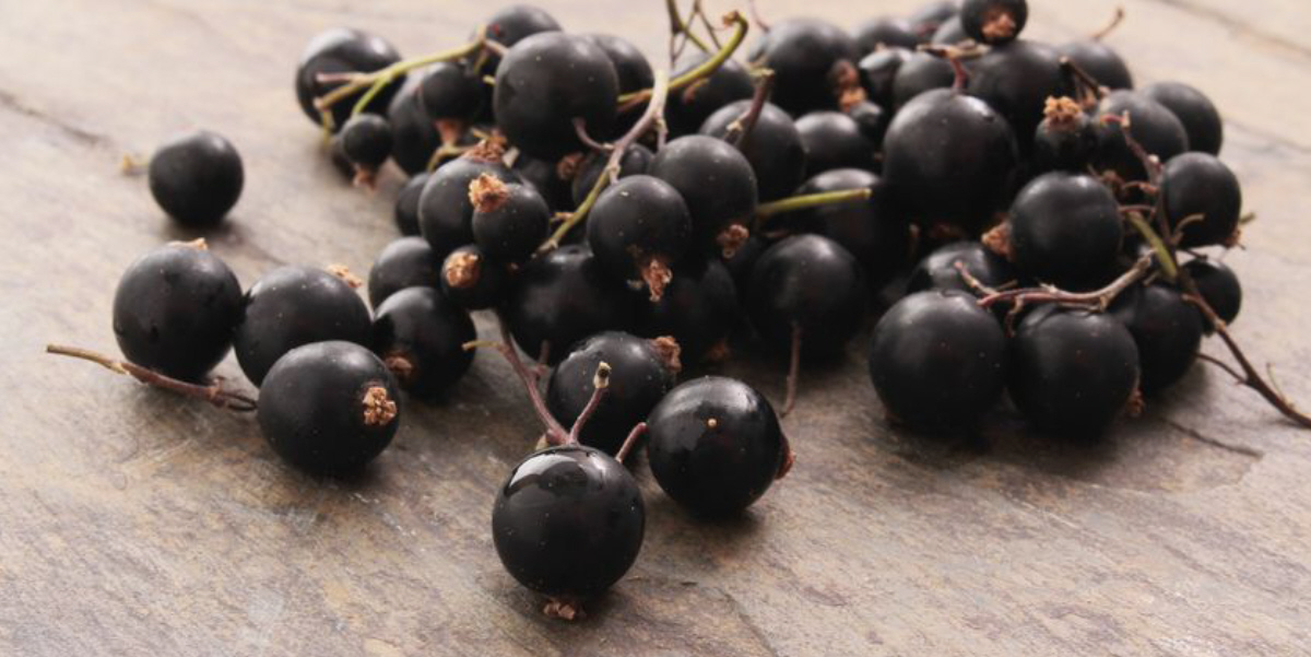 On a quest for winter wellness? Looks like a job for super blackcurrants article image