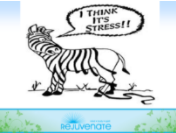 Beliefs & Stress article image